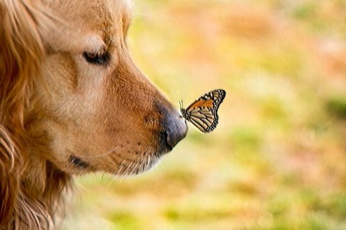 Holtkamp-Dog-Butterfly