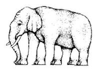 Problems in Democracy - Elephant
